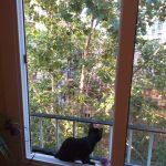 Greta disfrutando de las vistas