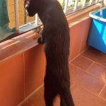 Greta cotilleando por el balcón