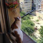 Neko observando el parque con seguridad